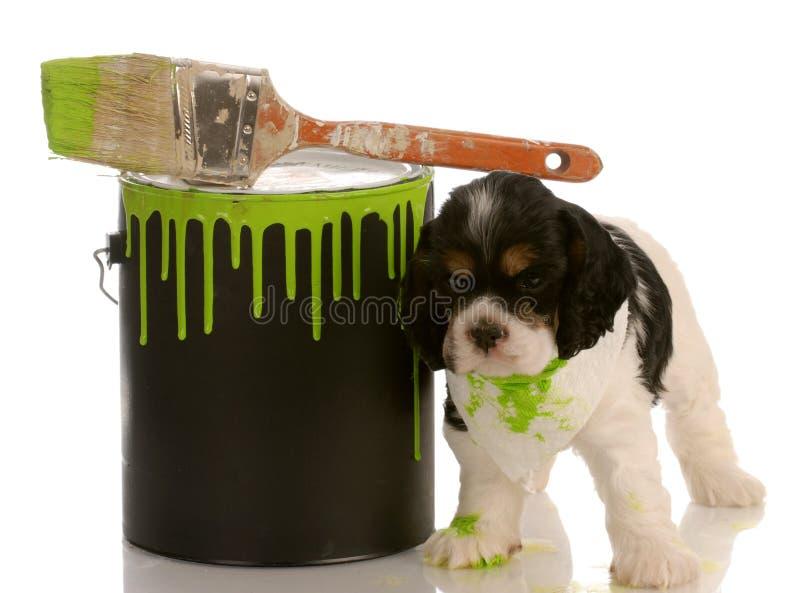 Schadelijk puppy stock fotografie