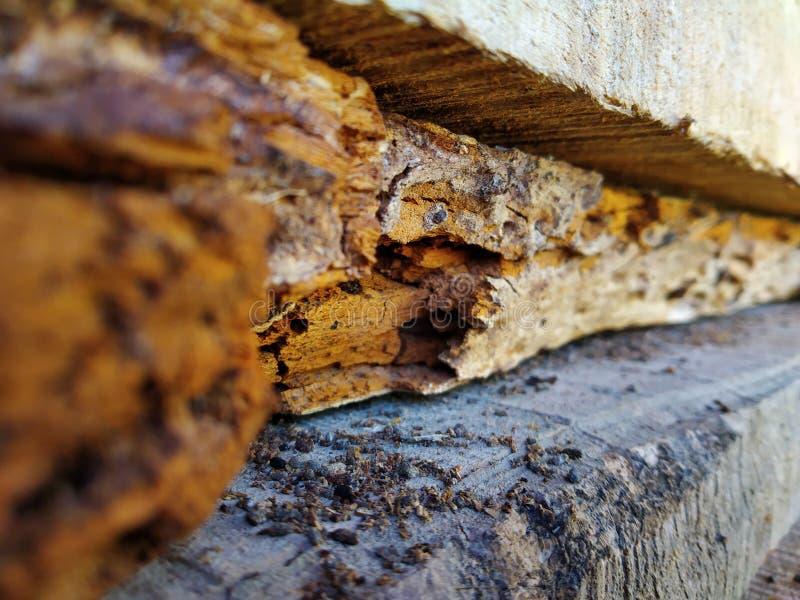 Schadenholz stockfotos