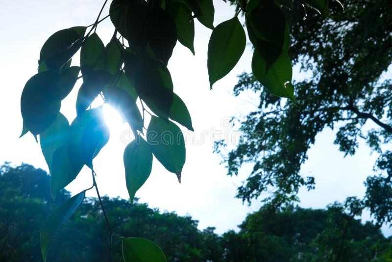 Schaduw na de boom stock afbeelding