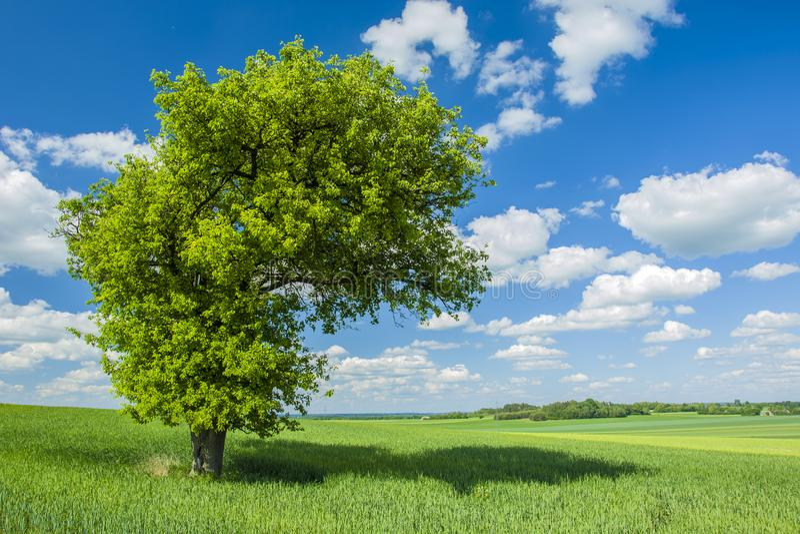 Schaduw onder een grote boom op het gebied royalty-vrije stock afbeeldingen