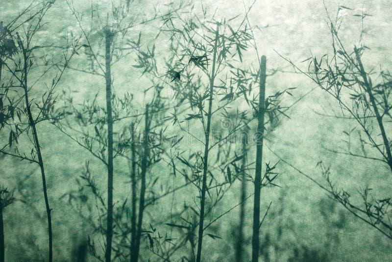 Schaduw van bamboe stock fotografie