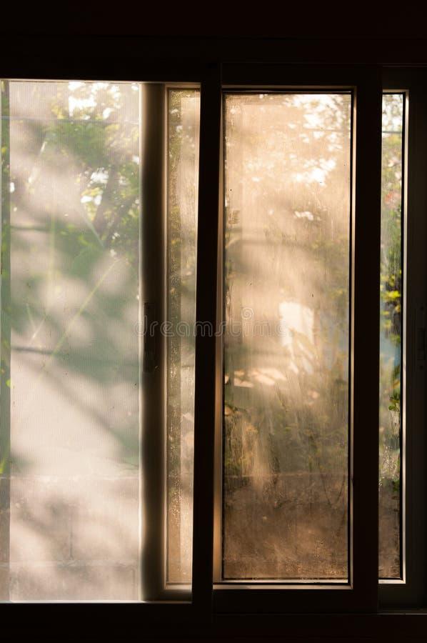 Schaduw van bladeren op vensterglas en het scherm van de mugdraad royalty-vrije stock afbeeldingen