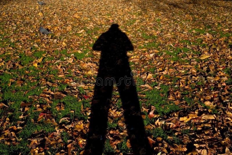Schaduw van de mens in park stock afbeelding