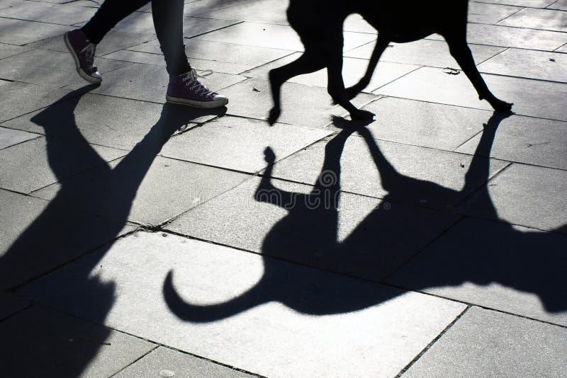 Schaduw van een hond en zijn eigenaar die een gang nemen royalty-vrije stock fotografie