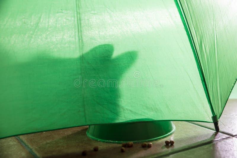 schaduw van een kat op een groene achtergrond stock fotografie