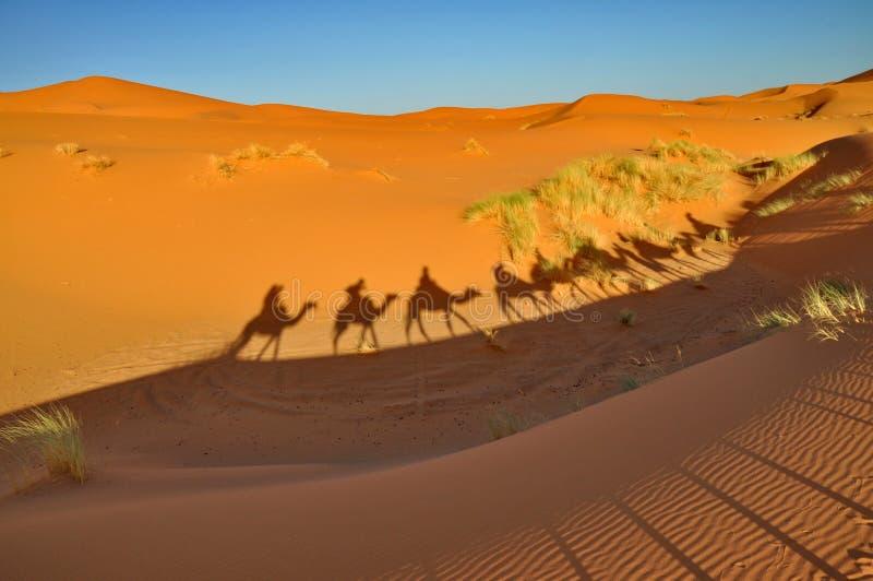 Schaduw van Kamelen in Merzouga-woestijn stock afbeelding