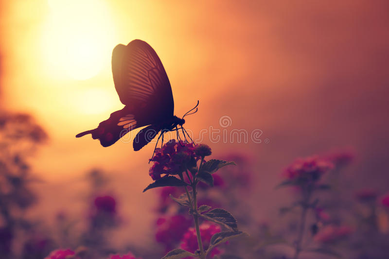 Schaduw van vlinder op bloemen met zonlichtbezinning van wat stock foto's
