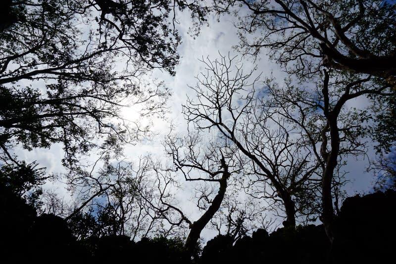 Schaduwboom royalty-vrije stock foto's