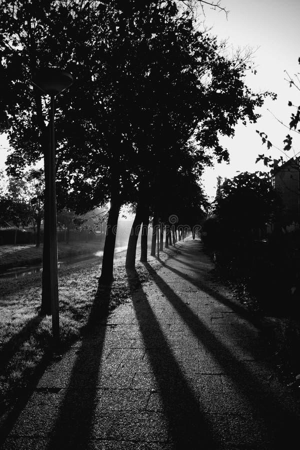Schaduwen en Bomen stock afbeeldingen