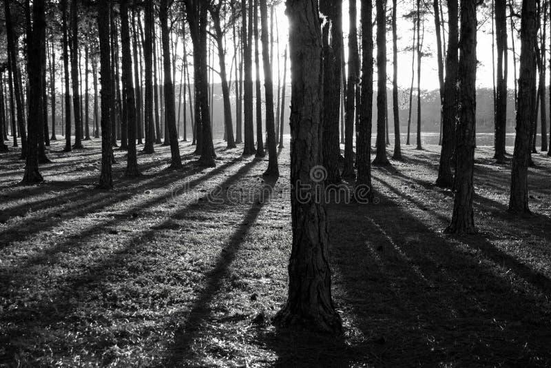 Schaduwen in het Bos royalty-vrije stock afbeeldingen