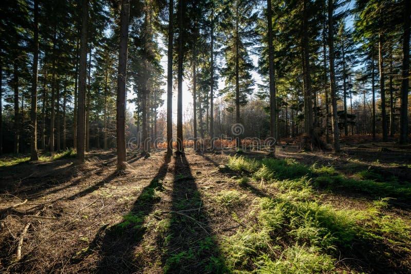 Schaduwen in het bos worden gegoten dat stock afbeeldingen