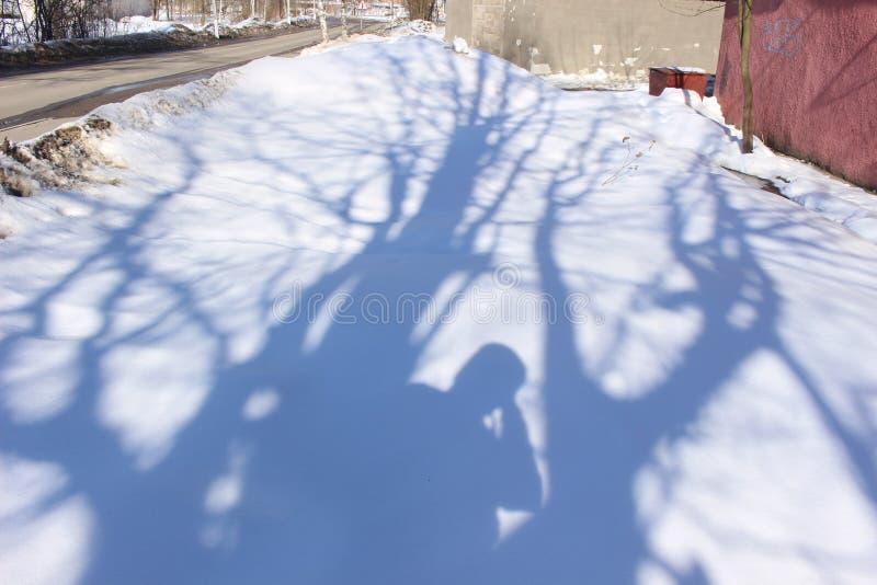 Schaduwen op de Sneeuw Schaduwen van de bomen Schaduwen van de heldere zon stock afbeelding