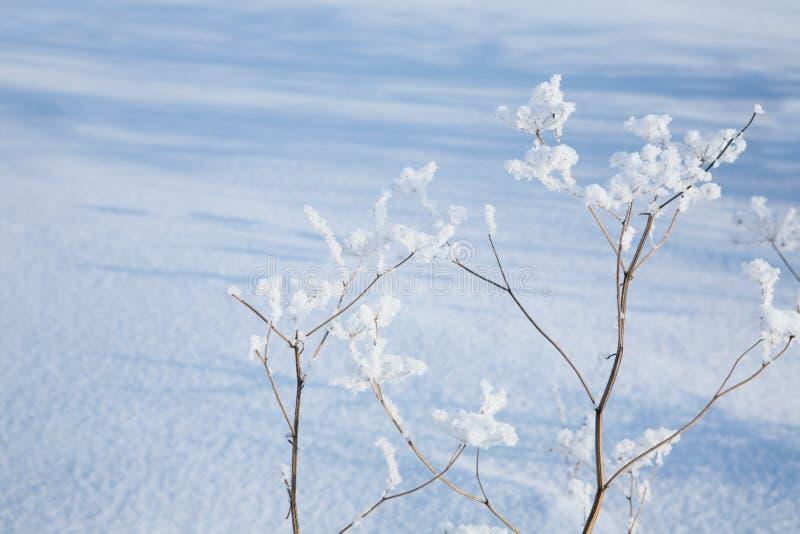 Schaduwen op een sneeuw. royalty-vrije stock foto's