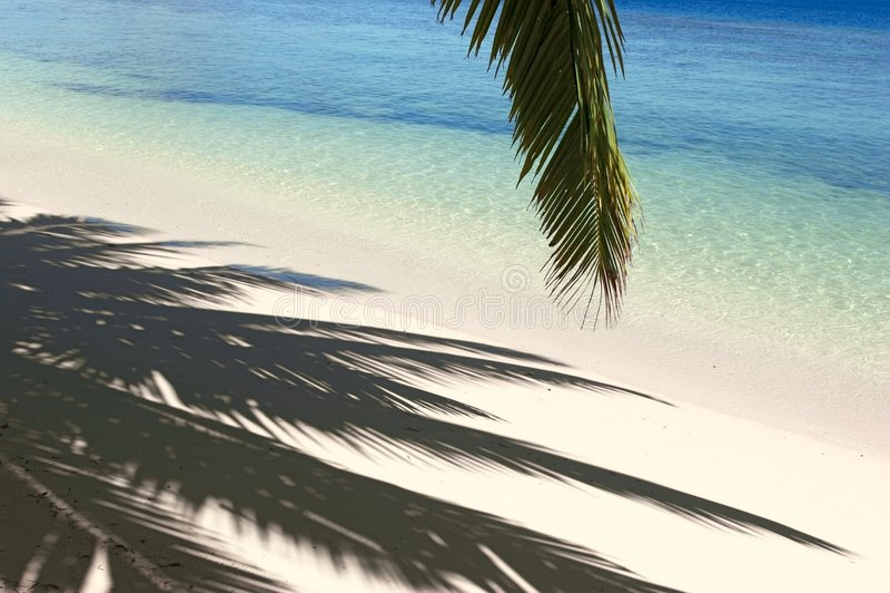Schaduwen van de palm stock fotografie