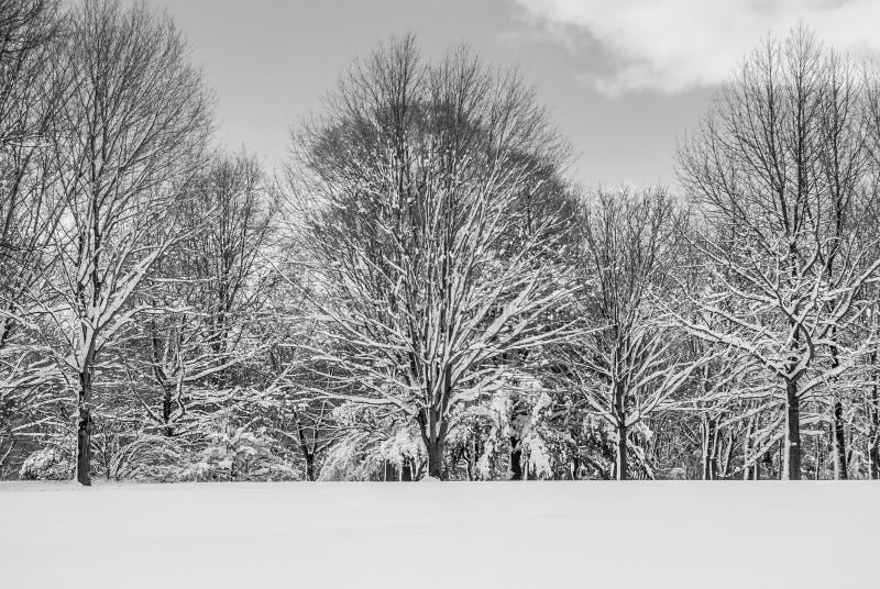 Schaduwen van de winter stock afbeelding