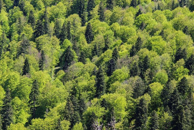 Schaduwen van Groen royalty-vrije stock fotografie