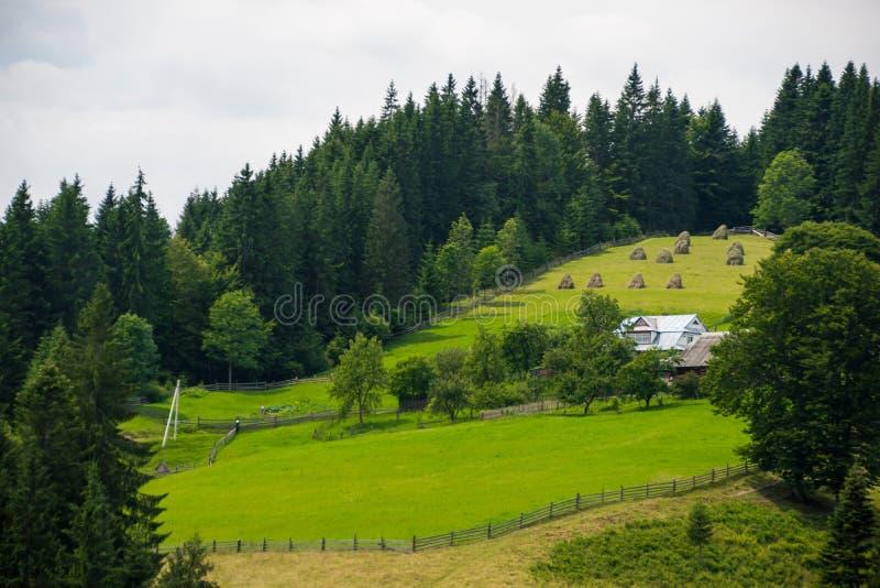 Schaduwen van groen gras bij het landbouwbedrijf royalty-vrije stock afbeelding