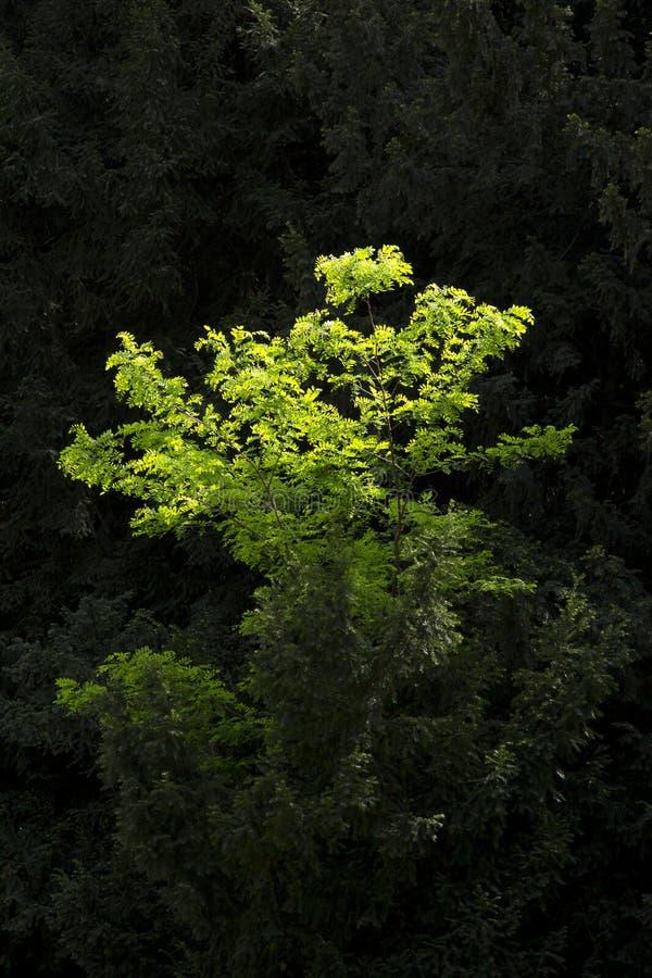 Schaduwen van groene kleur stock afbeelding