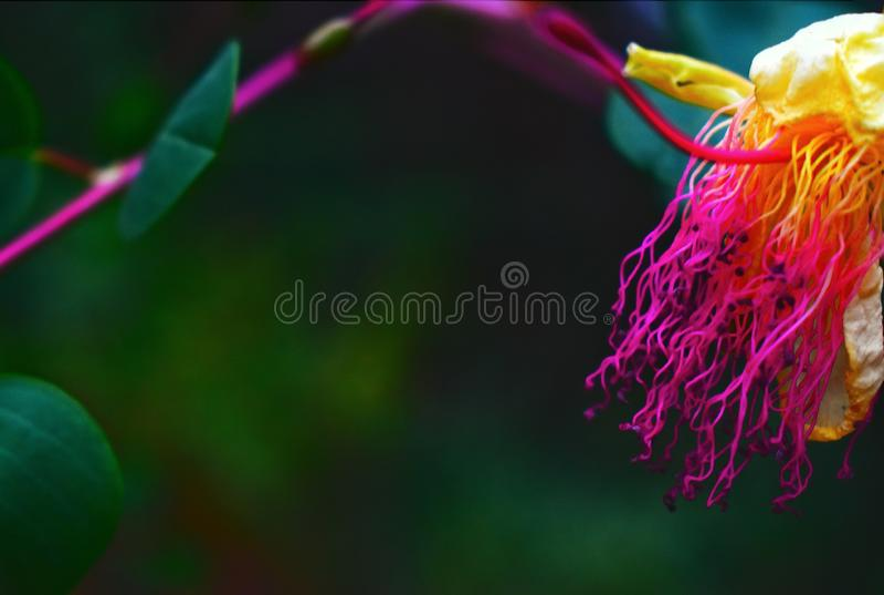 Schaduwen van kleuren Wilde exotische bloemen die tijdens een stijging in de voorsteden van Beiroet Libanon op juni-de zomerper d stock foto