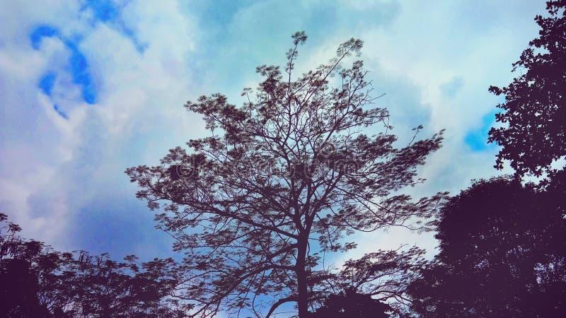 Schaduwenbomen & blauwe Hemel royalty-vrije stock foto's
