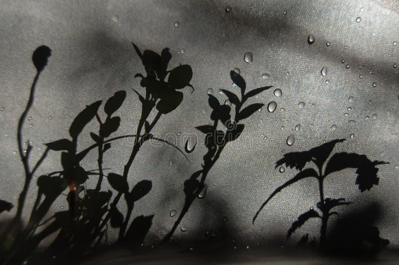 Schaduwinstallaties op de stof stock afbeeldingen