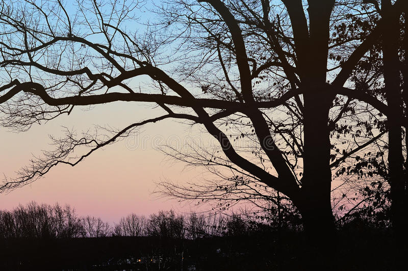 Schaduwrijke Bomen in Zonsondergang royalty-vrije stock fotografie