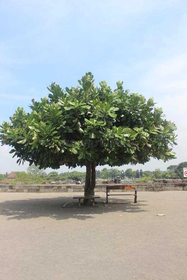Schaduwrijke boom op groot gebied royalty-vrije stock afbeelding