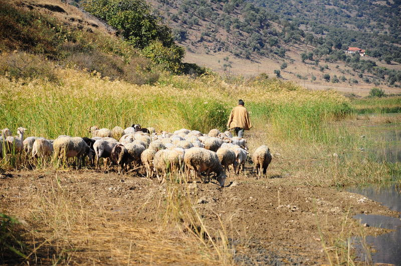 Schafe durch See lizenzfreie stockfotos