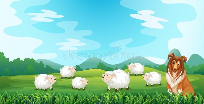 Schafe und Jagdhund vektor abbildung