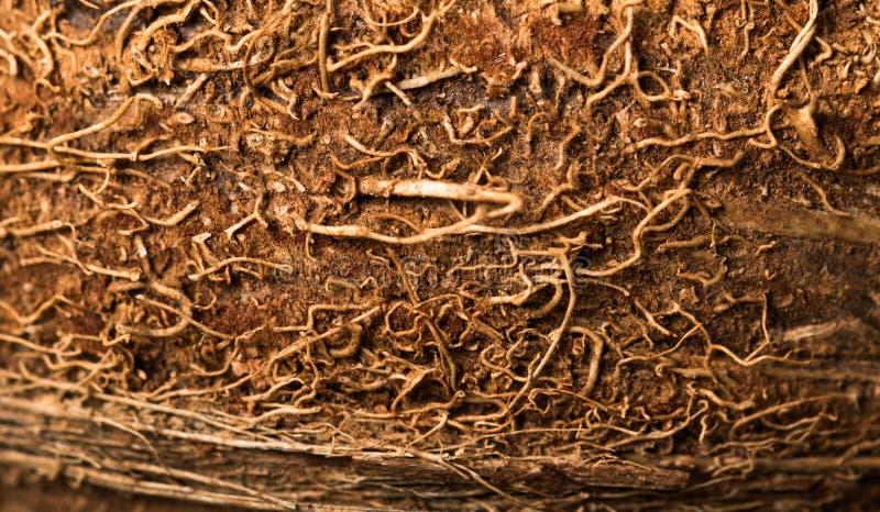 Schale des Kokosnussnahaufnahme-Hintergrunds lizenzfreie stockbilder