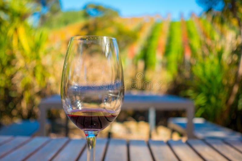 Schale Rotwein auf Weinberghintergrund in waiheke Insel in Auckland, in einem schönen blauen Himmel in der Sommerzeit lizenzfreies stockbild
