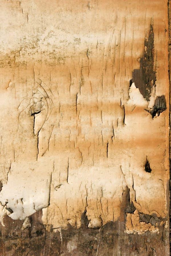 Schalen-Lack lizenzfreies stockbild