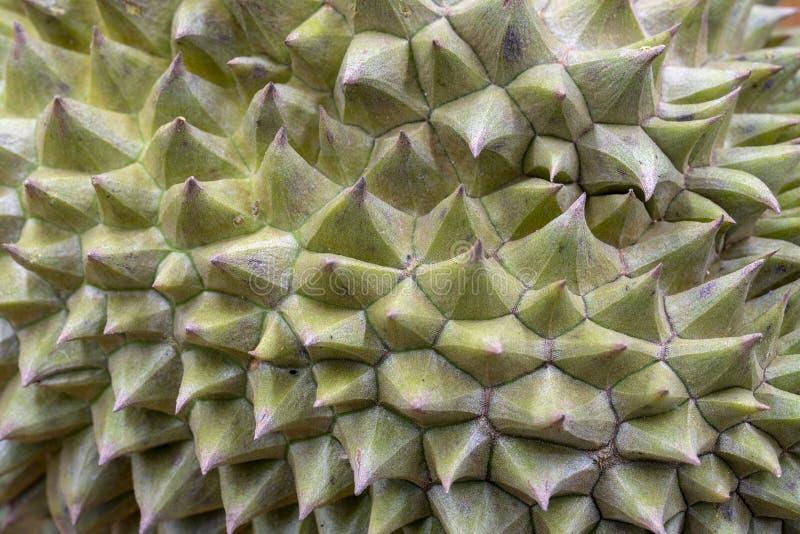 Schalen-Nahaufnahmefoto tropische Frucht Durian stacheliges Durianhautbeschaffenheit mit harten Spitzen Scharfe Nadel auf exotisc stockbild