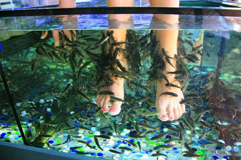 Schalenhautfüße Fische lizenzfreies stockbild