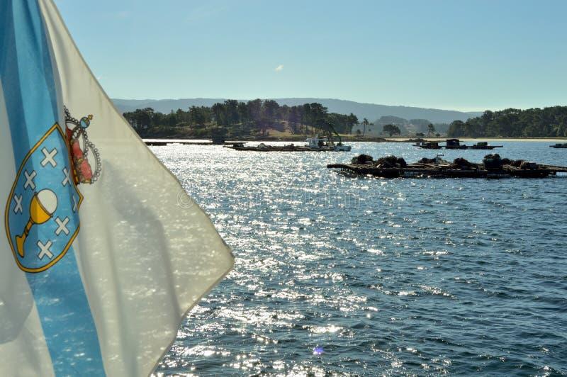 Schalentiere, die in der galizischen Küste ernten stockbilder