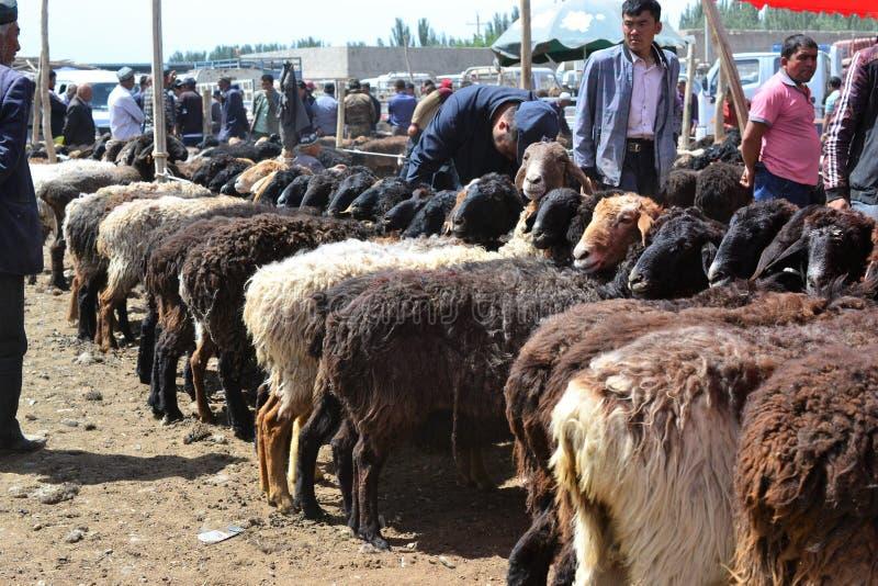 Schapen bij Uyghur-de bazaarmarkt van het Zondagvee in Kashgar, Kashi, Xinjiang, China royalty-vrije stock afbeelding