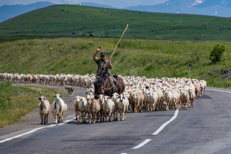 Schapen herder met zijn troep op de weg in Armenië stock afbeeldingen