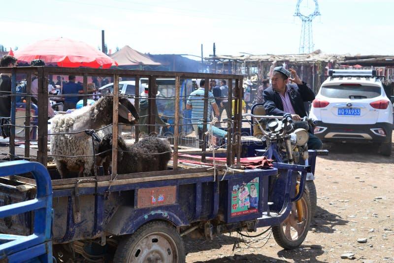 Schapen in voertuig bij Uyghur-de bazaarmarkt van het Zondagvee in Kashgar, Kashi, Xinjiang, China stock foto's