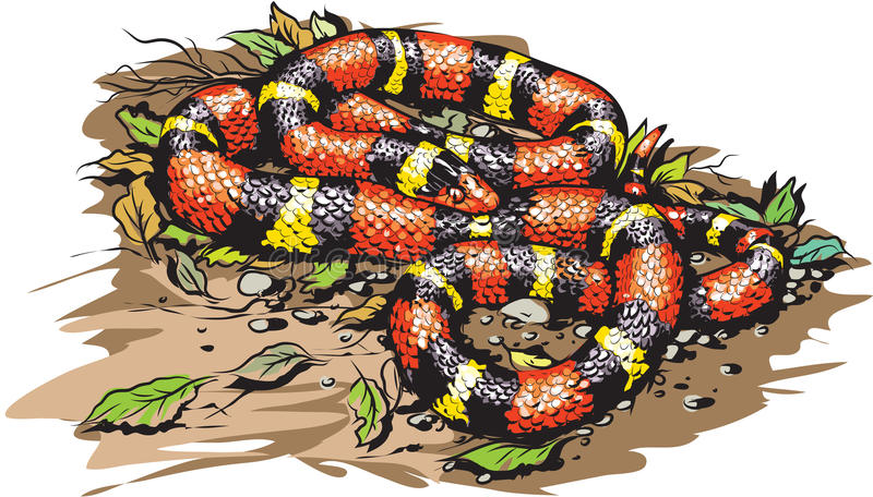 Scharlakansröd konungorm stock illustrationer