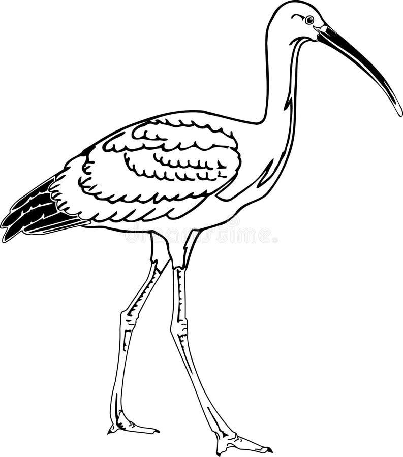 Scharlaken Ibisillustratie royalty-vrije illustratie