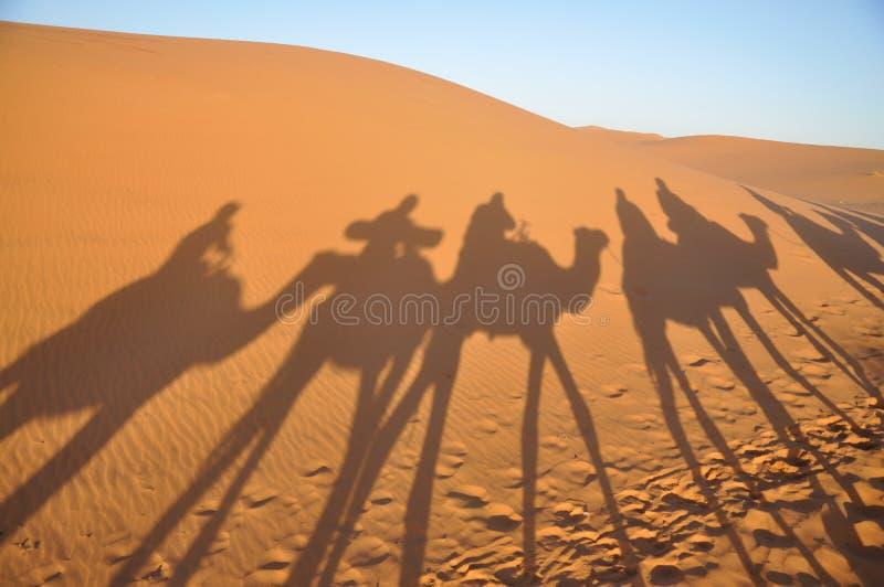 Schatten der Kamele in der Sahara-Wüste stockfotografie