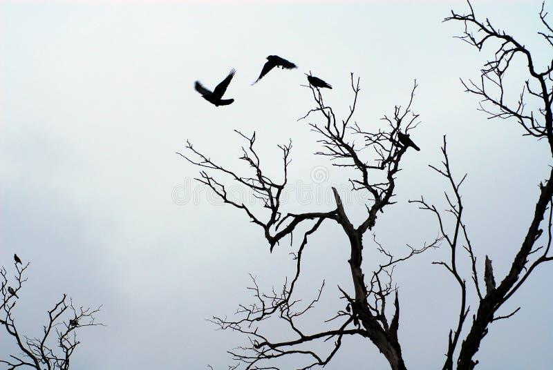Schatten der Vögel, die weg fliegen lizenzfreies stockbild
