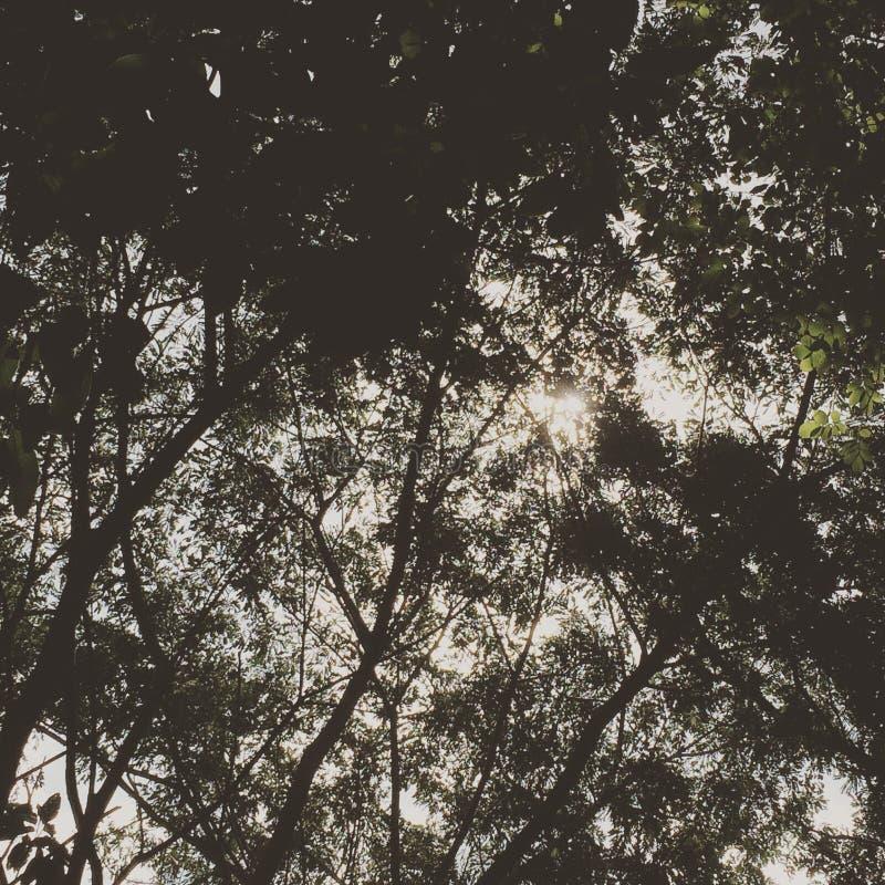 Schatten des Baums lizenzfreies stockfoto