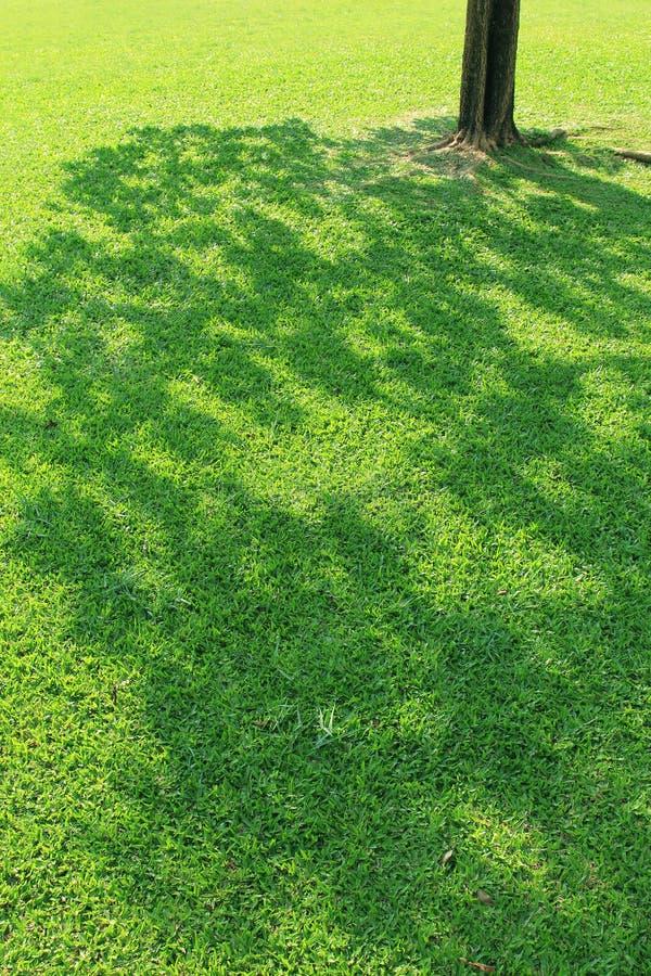Schatten des Baums stockbilder