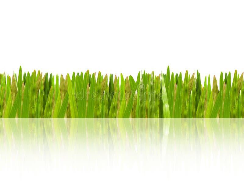 Schatten des grünen Grases stockfotografie