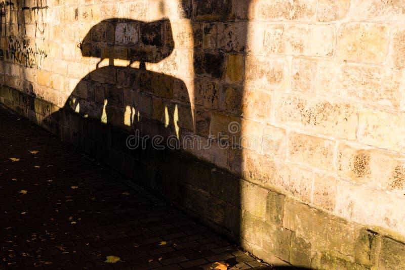 Schatten des parkendes Auto mit Dachkasten stockfotos