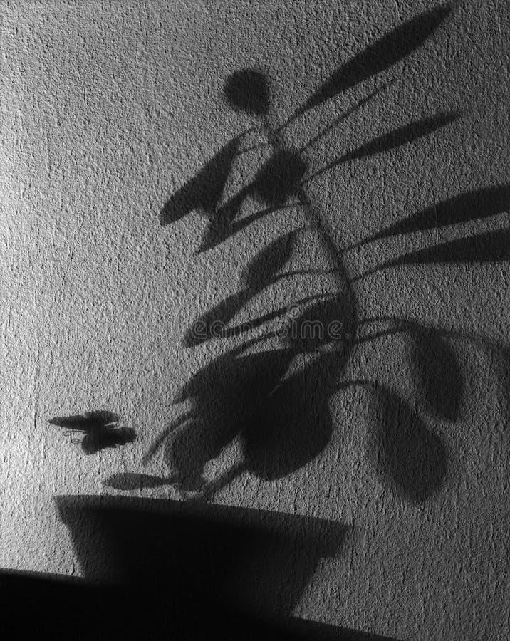 Schatten einer ungesehenen Wirklichkeit lizenzfreies stockfoto