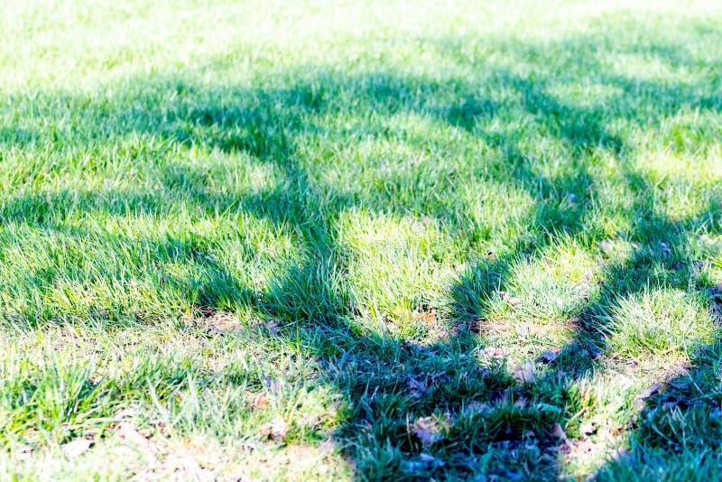 Schatten eines Baums ohne Blätter auf grünem Hintergrund lizenzfreie stockbilder