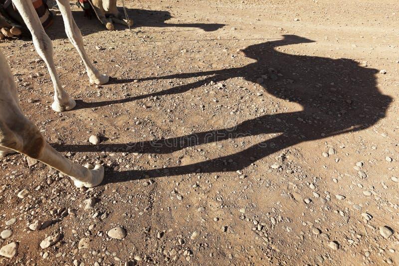 Schatten eines Dromedars (Kamel). lizenzfreie stockfotos