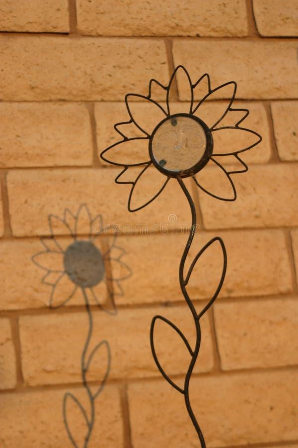 Schatten nach einer Sonnenblume stockfoto